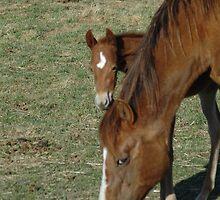 Peeking Foal by lincolngraham