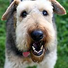 Happy Airedale by cherylwelch