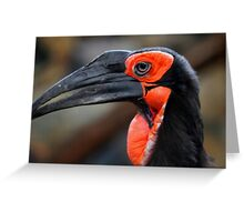 African Ground Hornbill Greeting Card