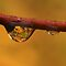 Raindrops or dewdrops