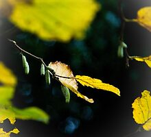 Autumn Story by wildscape