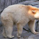 BLACK BEAR(White Phase) by Larry Trupp