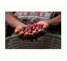 harvesting coffee Art Print