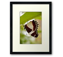 drying out, madagascar Framed Print