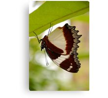 drying out, madagascar Canvas Print