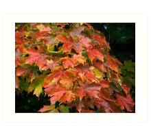 Autumn Colors Art Print