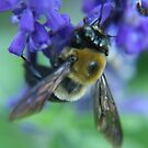 Bumble Bee by artsthrufotos