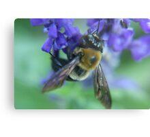 Bumble Bee Metal Print