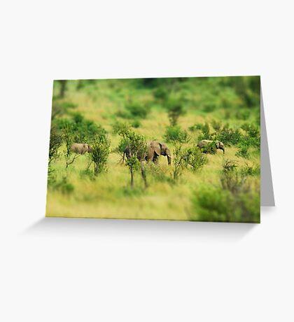 lady elephant walk, pilanesburg Greeting Card