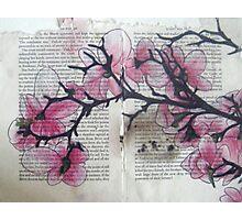 Magnolias III Photographic Print