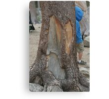 Tree Bark - Page 10 Canvas Print