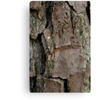 Tree Bark - Page 11 Canvas Print