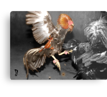 Pinoy Fighting Cock Metal Print