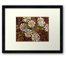 Outback Australian  Wild flowers, Cobar , NSW. Framed Print