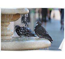 Pigeon Pool Poster