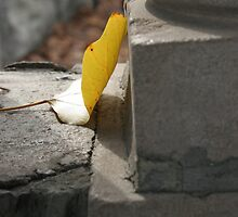 Cement Leaf by redefinedjuliet