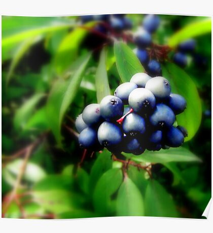 blue berries Poster