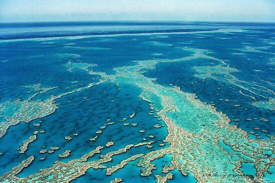 The Great Barrier Reef © Vicki Ferrari by Vicki Ferrari