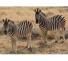 Zebra - Etosha National Park Photographic Print