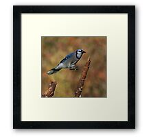 The Tree Hopper Framed Print