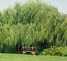 Bench By The Weeping Willow by Darlene Bayne