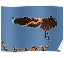 0328101 Great Blue Heron Poster
