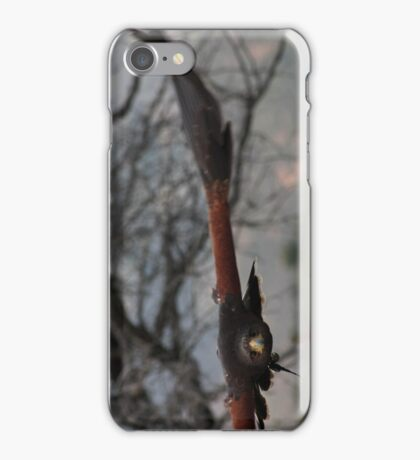Harris hawk 3 iPhone Case/Skin
