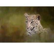 Leopard! Photographic Print