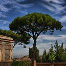 Roman Garden by Barbara  Brown