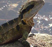 Senior Water Dragon by stevealder