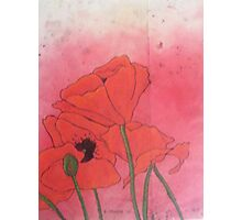 Poppies XVI Photographic Print