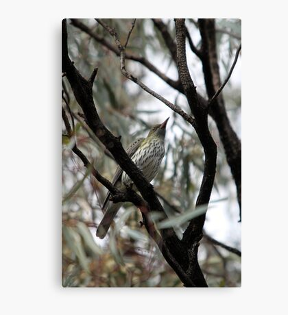 Olive-backed Oriole Canvas Print