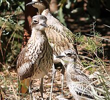 Threatened Birds of Australia by EnviroKey