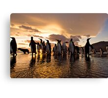 South Georgia Sunrise of Kings Canvas Print