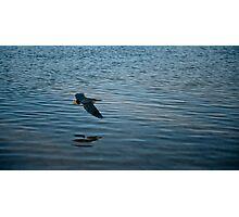 Bird over water Photographic Print