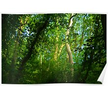 Light in the Trees Poster