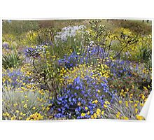 Spring wildflower colour Poster
