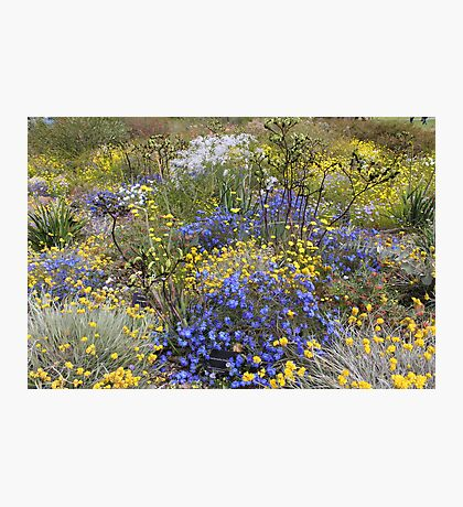 Spring wildflower colour Photographic Print