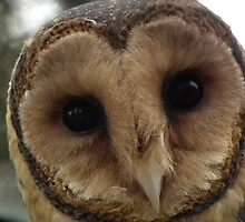 Barn Owl Portrait 2 by Craig Stronner