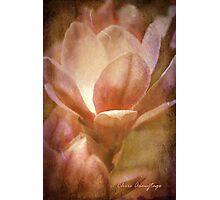 Magnolias 1 Photographic Print
