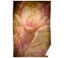 Magnolias 2 Poster