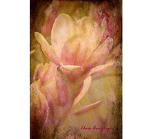 Magnolias 2 Photographic Print