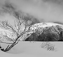 Resilient snow gum by Will Hore-Lacy