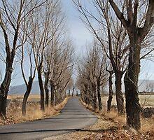 Secondary roads II by OlurProd