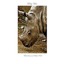 Ailsa The Baby Rhino. Photographic Print