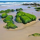 Mossy rocks, Mallacoota Inlet, Gippsland, Victoria. by johnrf