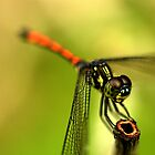 Dragonfly on Perch II by Amran Noordin