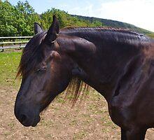 Beautiful Brown Horse.. by lynn carter