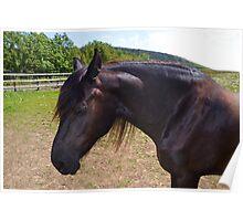 Beautiful Brown Horse.. Poster
