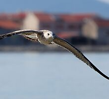 Flying seagull over the sea by Patrik Ruzic